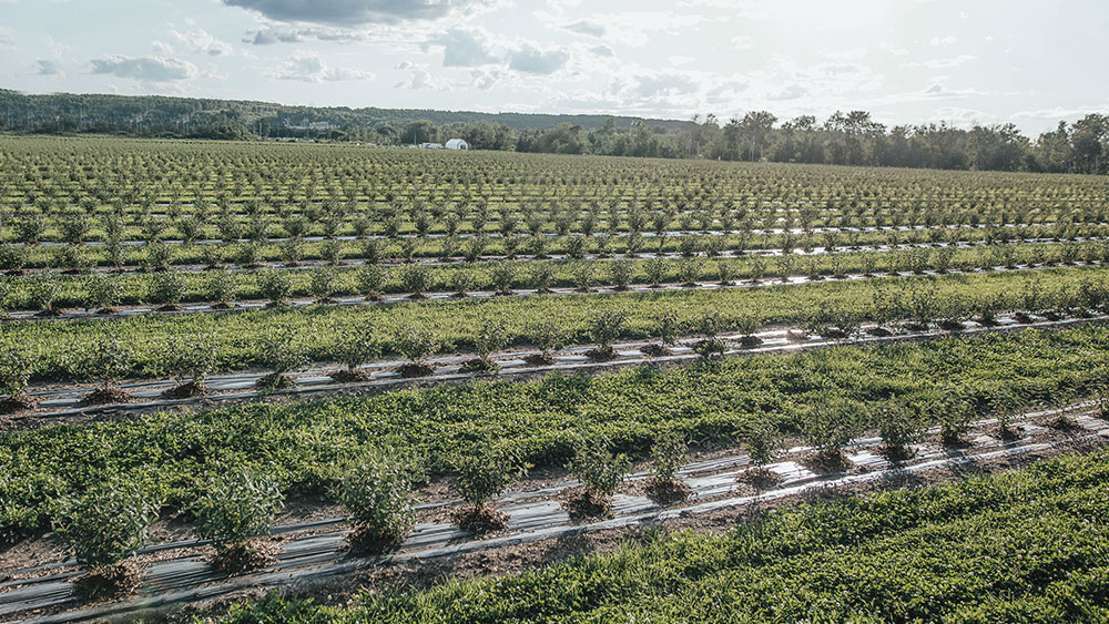 Aerial view of the orchard
