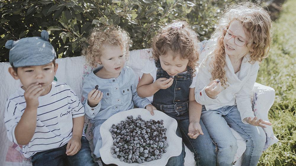 Children quietly eating Haskaps