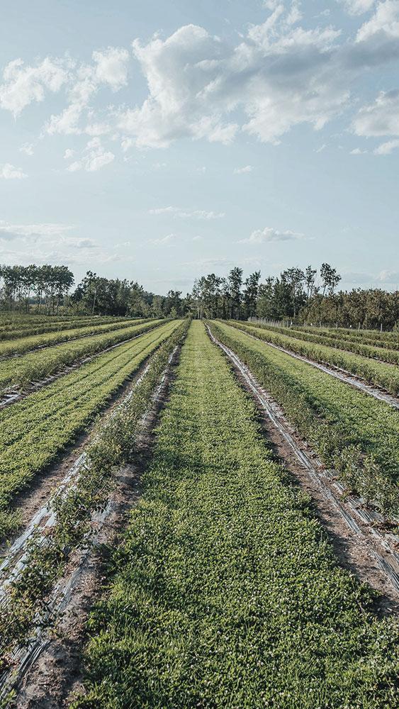Verger du Terroir orchard